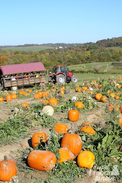 Let every member of the family pick their own pumpkin at the patches at Triple B Farms.