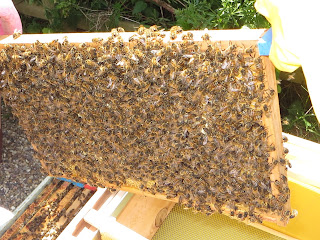 re-hiving a honey bee colony