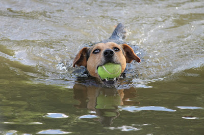 Dog Obedience Training Schools can Correct Obedience Problems with the Right Lessons