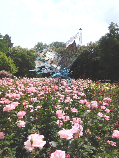 Butterfly, Beautiful Roses, Yambol City Park, Yambol,