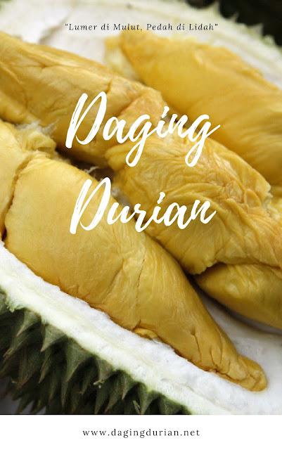 sedia-daging-durian-medan-terlegit-di_23