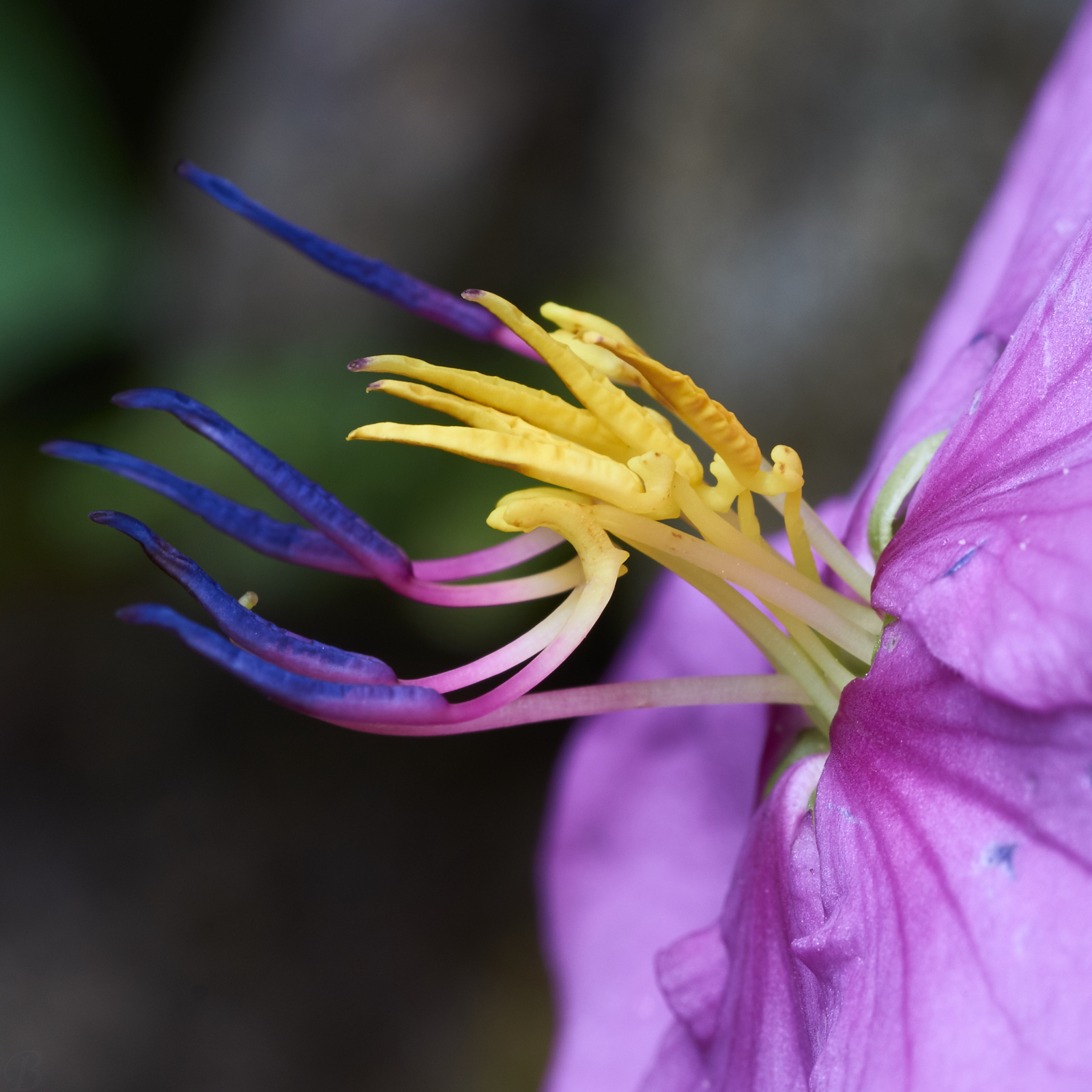 flower, purple,yellow,mauve,green,grey,Philippines,macro photography