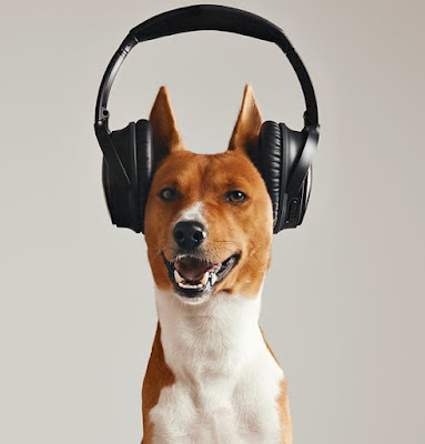 Basenji dog grins wearing headphones playing an Audible for Dogs audiobook