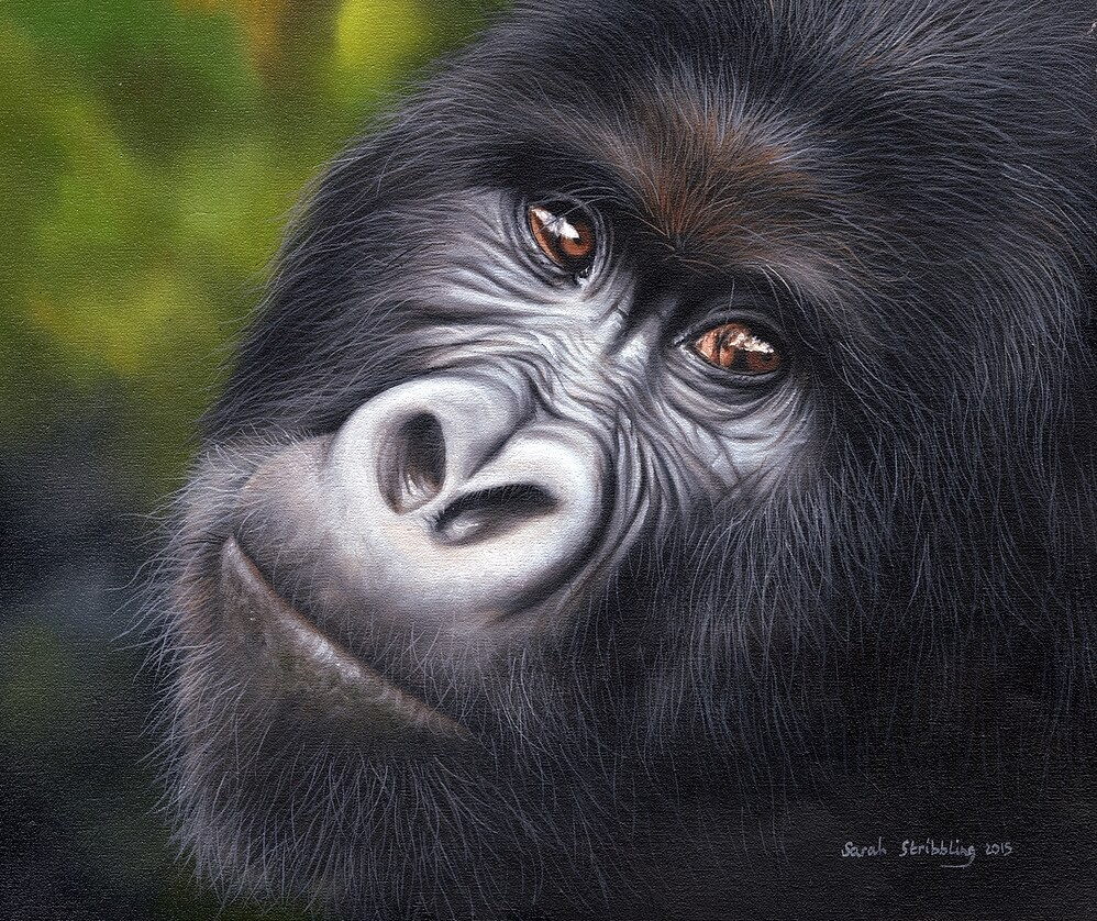 08-Mountain-Gorilla-Sarah-Stribbling-A-Wildlife-and-Pet-Portrait-Artist-www-designstack-co
