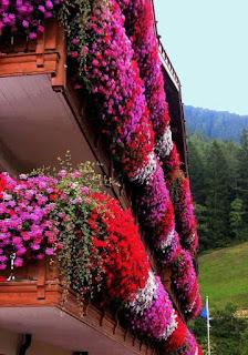 แต่งหน้าต่างบ้านด้วยพุ่มดอกไม้ สร้างกลิ่นอายบรรยากาศแบบชนบท