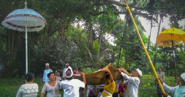 Bali Media Info: Makna dan Arti Upacara Ngangget Don ...