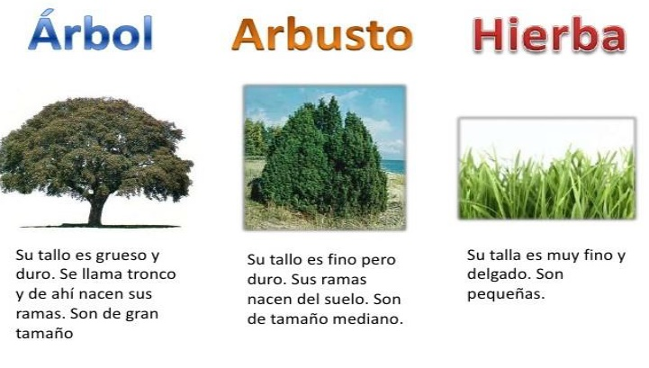 Villalpando segundo primaria enero 2017 for Arboles de hoja caduca y perenne nombres