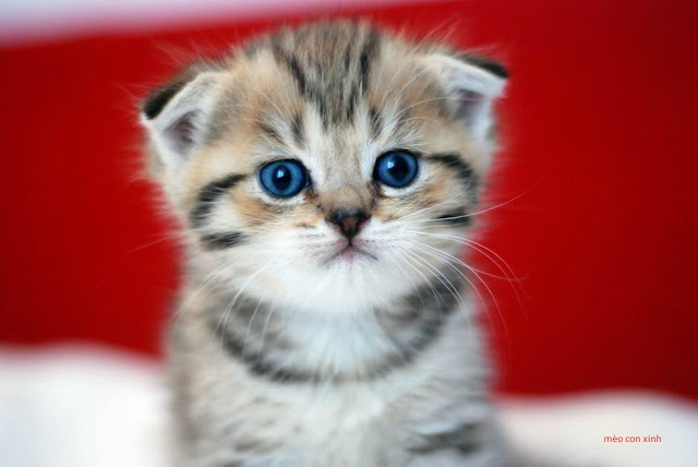 mèo đáng yêu nhất