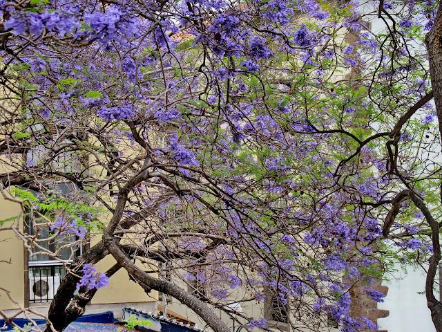 city full of flowers
