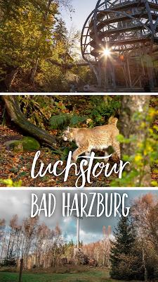 Luchstour Bad Harzburg | Premiumwanderung Harz | Wanderung-Bad-Harzburg | Wandern-im-Harz