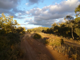 Camino a Sigüenza