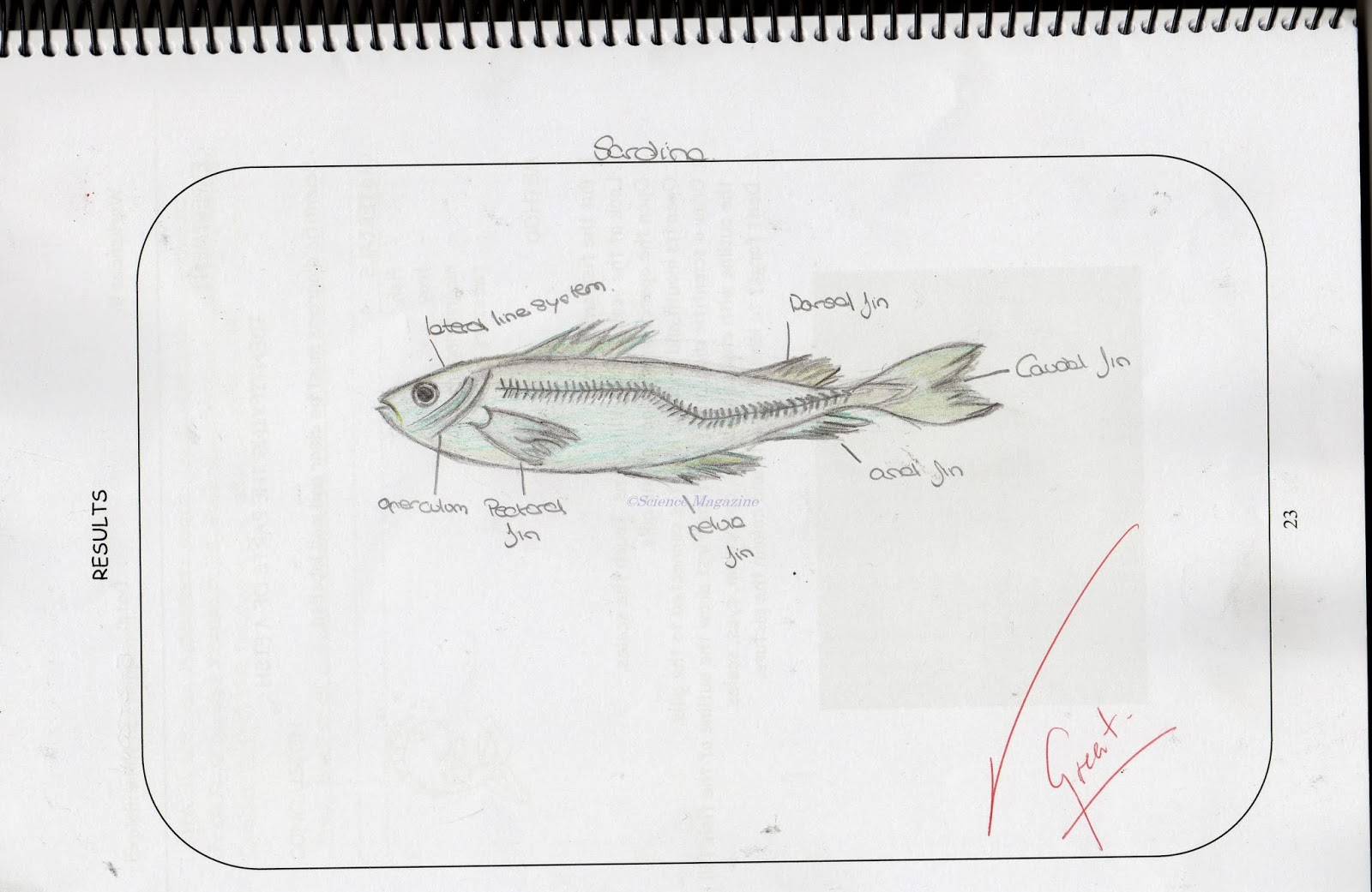 Science Magazine Studying The Anatomy Of A Fish And Drawing A Scientific Diagram