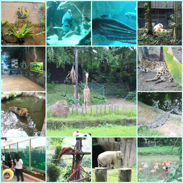 Best things to do and see in Zoo Negara, kuala Lumpur National Zoo, Malaysia. NBAM Blog photography