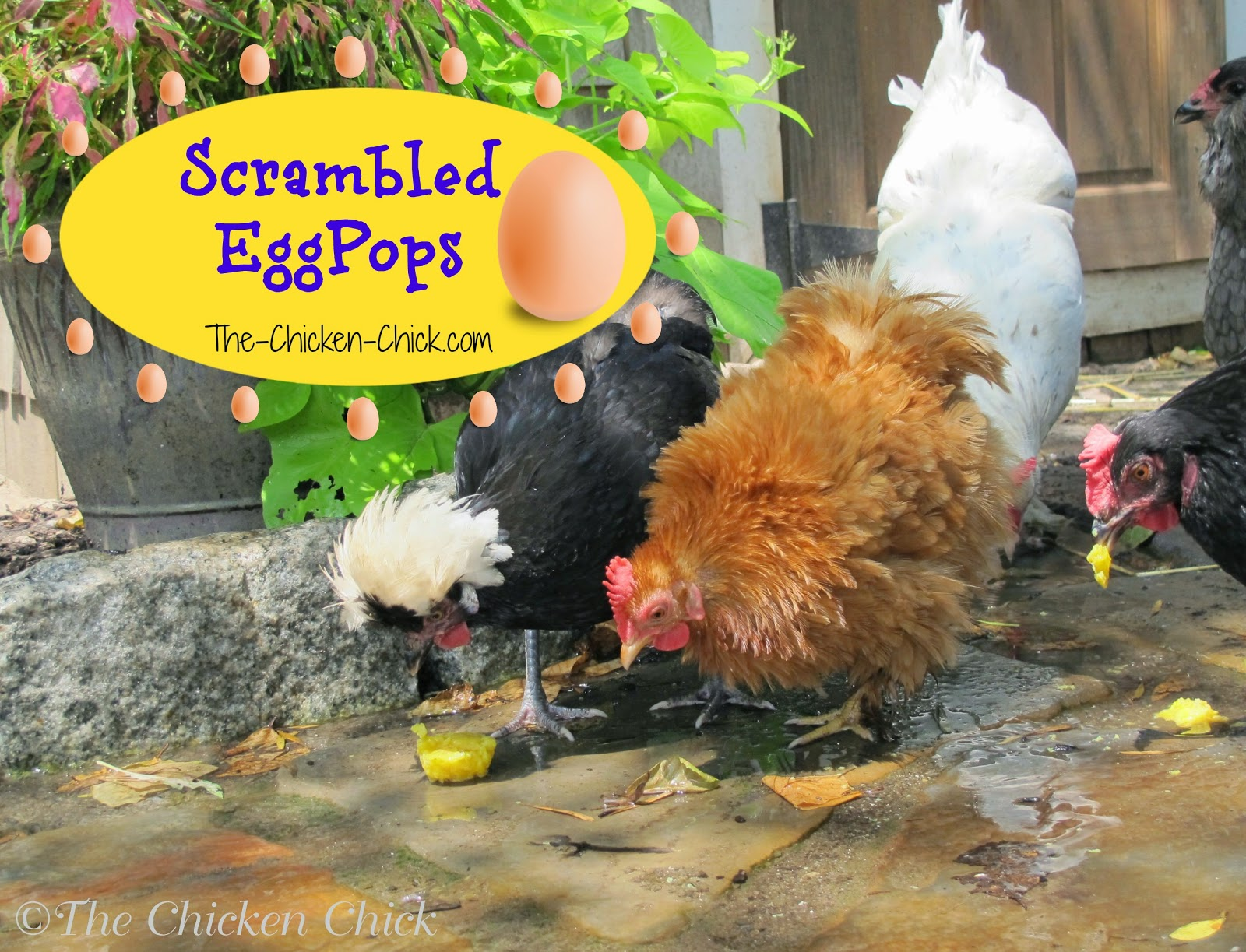 Scrambled EggPops recipe