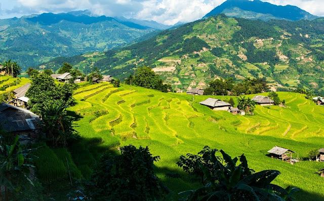 Vietnam is wonderful in ripen rice season 2