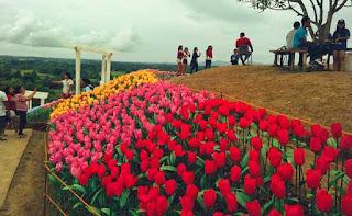 best tourist sites Glowing Garden Jardin Necitas at Pilar Bohol Philippines 2018