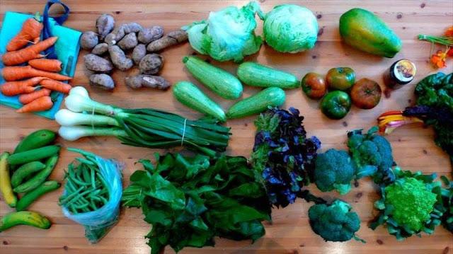 Conozca los 11 alimentos que nunca deben faltar en la dieta diaria