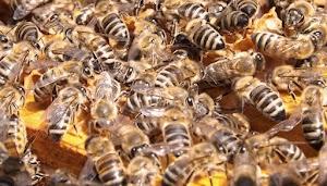 Lima Pelajaran Berharga dari Lebah