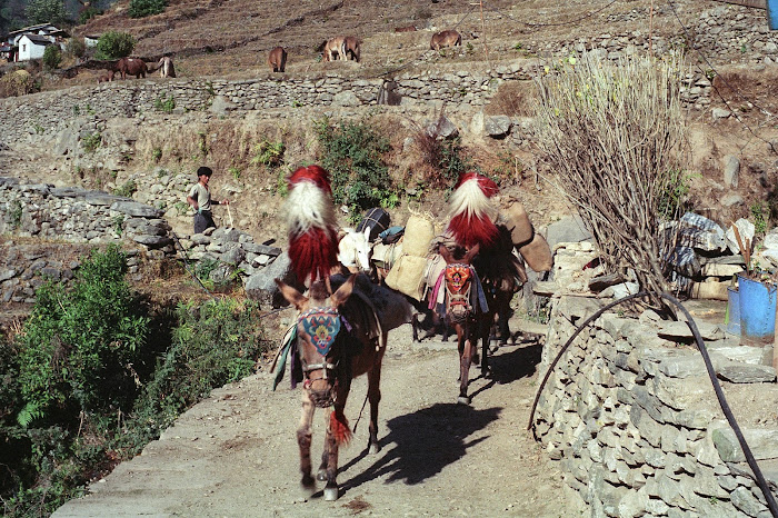 Népal, Pokhara, Annapurna, Hille, © L. Gigout, 1990
