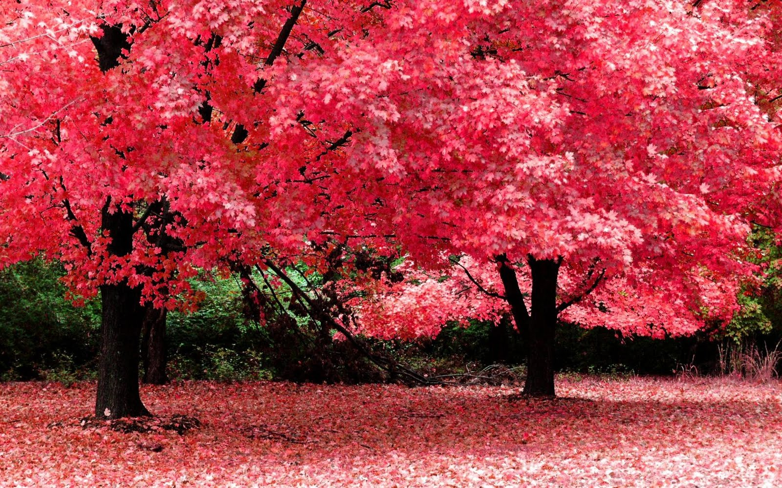 Autumn Season Nature Fantasy Wallpaper