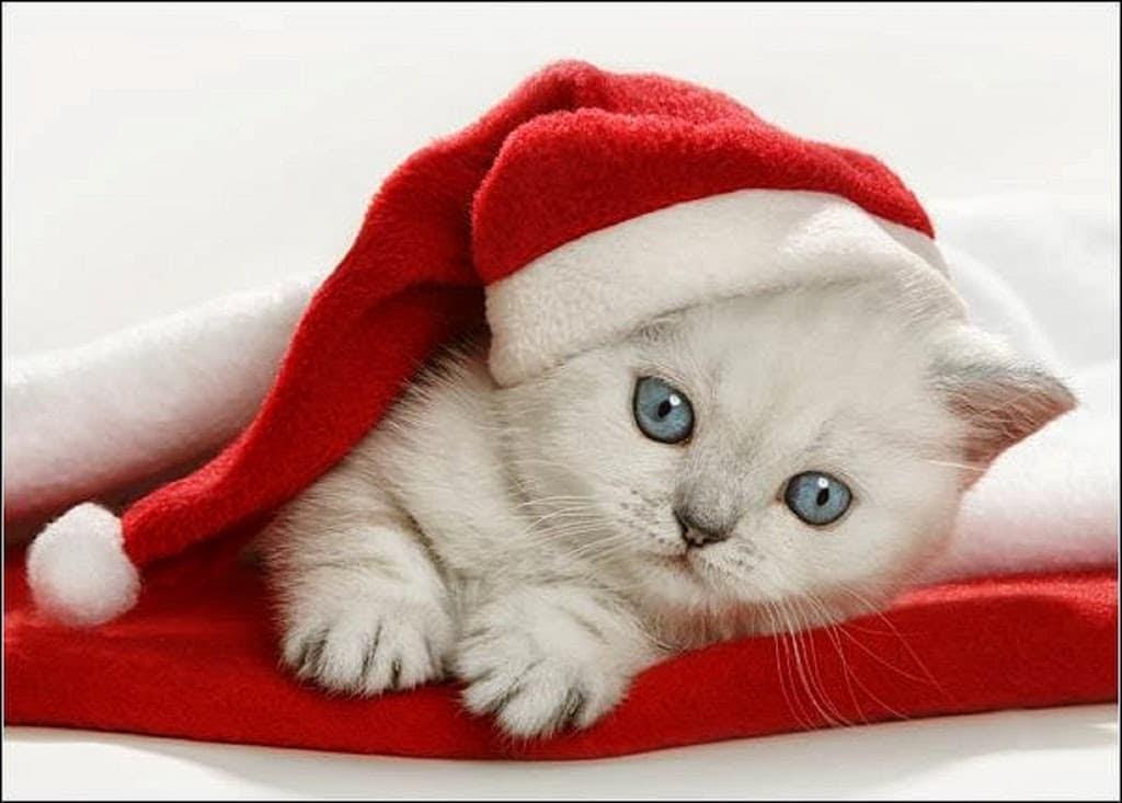 #374 Inocente Navidad | luisbermejo.com | podcast