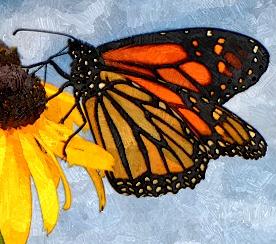 http://amajeto.com/games/amajeto_butterflies/