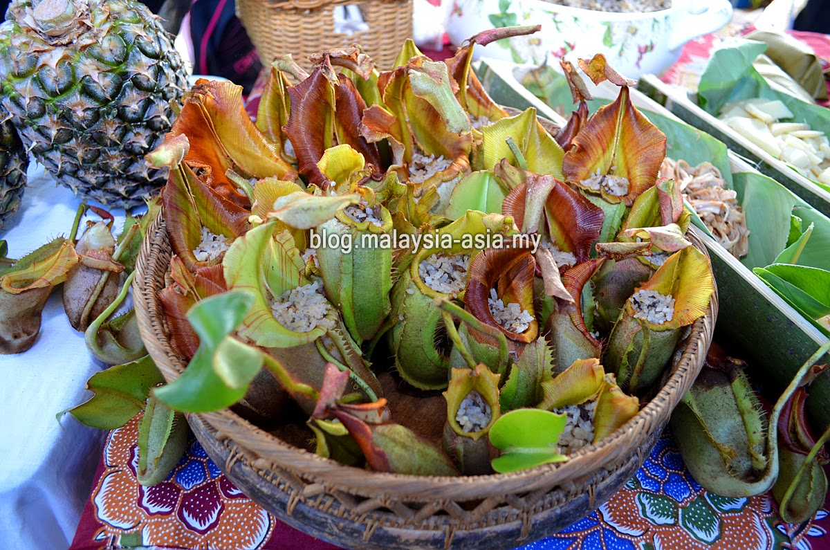 Pitcher Plant Rice Bario