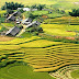 Joyful havest day on terraced rice at Lao Chai - Ta Van Villages