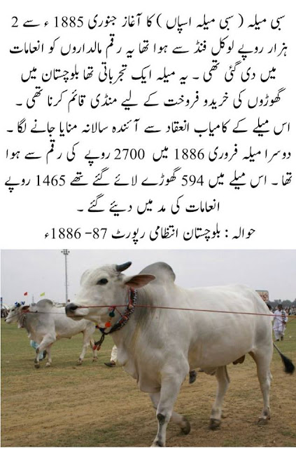 Sibi Mela Horse and Cattle Show