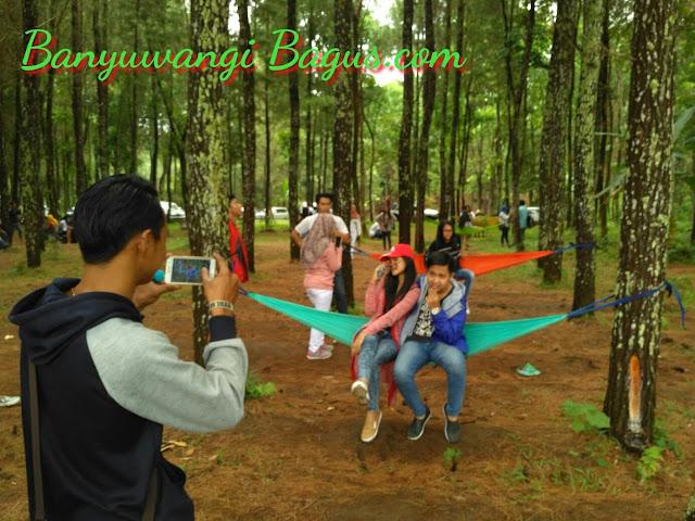 Wisata Pinus Songgon