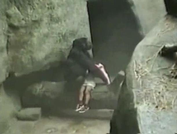 - Brookfield Zoo gorilla Binti Jua rescues a three year old boy who fell into the enclosure 1996