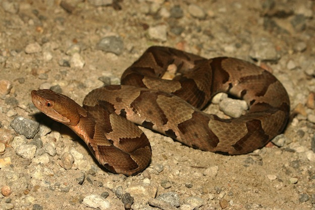 how to keep copperhead snakes away