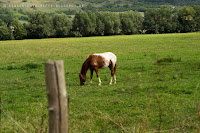 http://fineartfotografie.blogspot.de/2013/09/pferdekoppel-sichtweisen.html