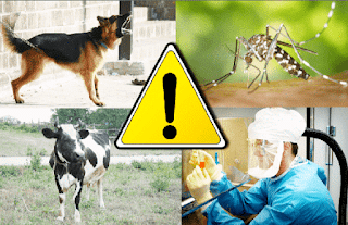 4 Penyakit Mematikan yang Ditularkan Oleh Hewan di Sekitar Kita