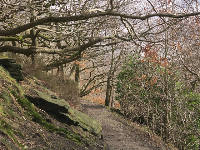 Woodland path in Shroggs Park Halifax with rocks and overhanging trees.