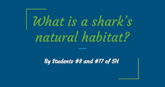 5th Graders' Shark Research Yields Many Interesting Facts