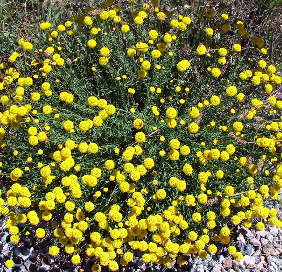 Fotos De Flores Flores Silvestres Variadas