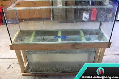 How to Make an Aquarium