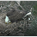 Webcam of D.C. bald eagles goes live with sound