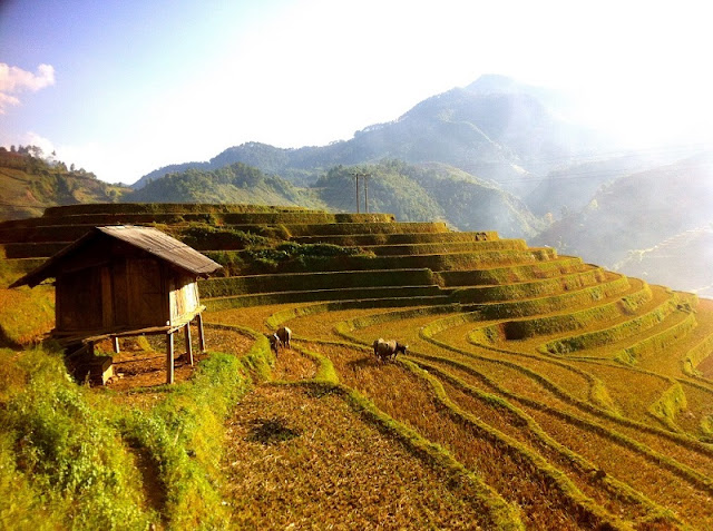 History of Mu Cang Chai terraced fields 2