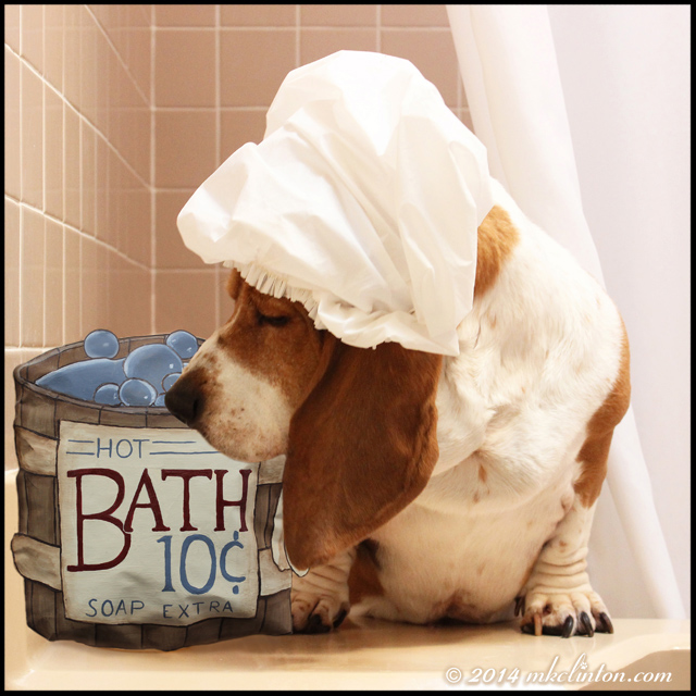 Bentley Basset is wearing a shower cap and sniffs a hot bath 10¢ sign