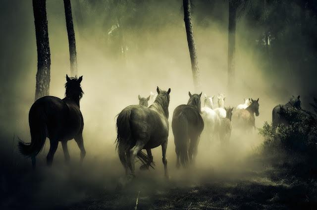 Group of Horse Running HD Wallpaper