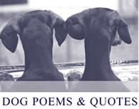 dog poems & quotes for loss of dog