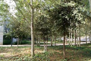 Jardins de Miquel Martí i Pol (Barcelona) per Teresa Grau Ros