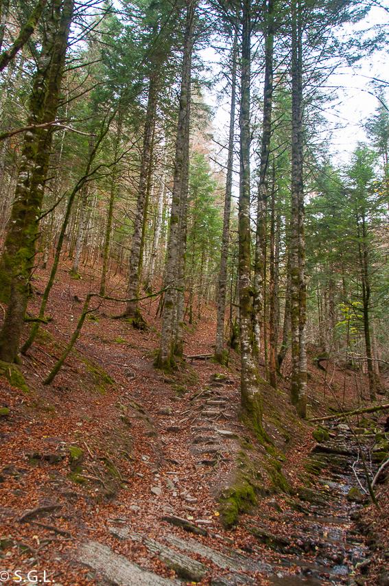 Sendero del bosque de Zabaleta. La selva de Irati