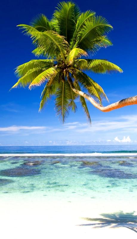Palm Tree Beach Wallpaper Hd Hotel And Beach