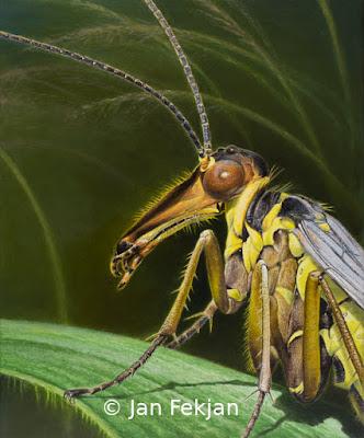 Bilde av digigrafiet 'Hå tenkjer ho på, skorpionflugo'. Digitalt trykk laget på bakgrunn av maleri av insekt. Illustrasjon av skorpionflue, Mecoptera. Hovedmotivet er et nærstudium av en skorpionflue som sitter på et strå i enga. Bakgrunnen er grønn. Bildet er i høydeformat.