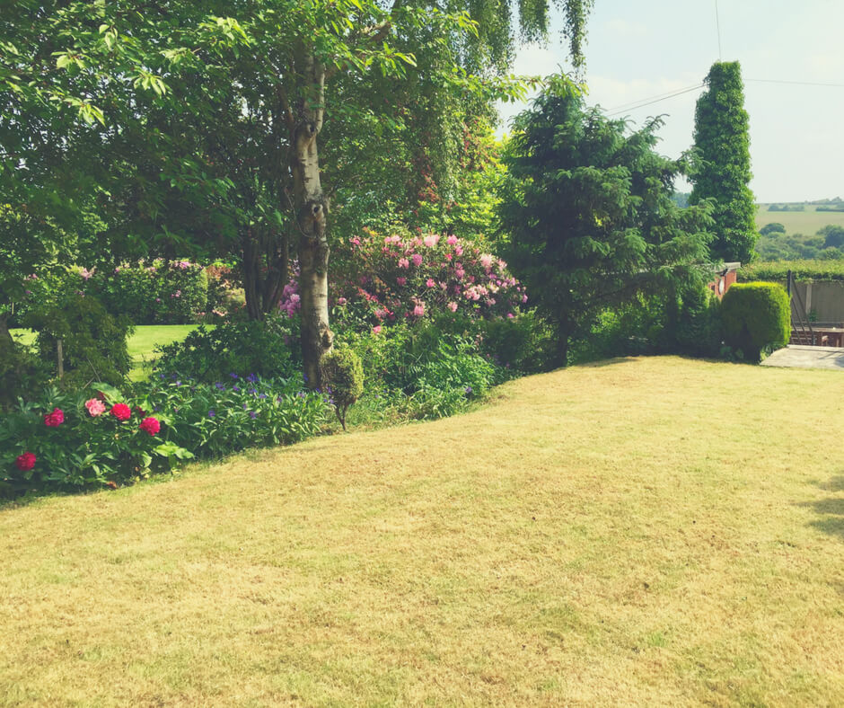 A garden waiting for kids to explore as a simple way to enjoy the summer.