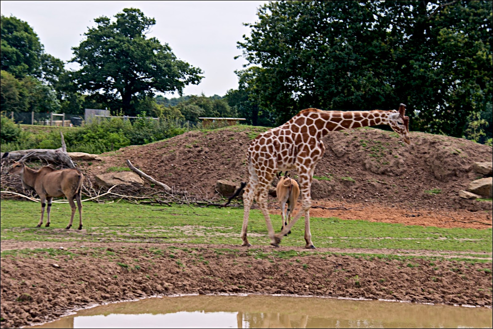 work of yorkshire wildlife park Award-winning yorkshire wildlife park has announced expansion plans that will bring £50m investment and over 300 extra jobs the park has secured 150 acres of land adjacent to the current site and is developing plans, which have the potential to make it one of the leading destinations in the uk.