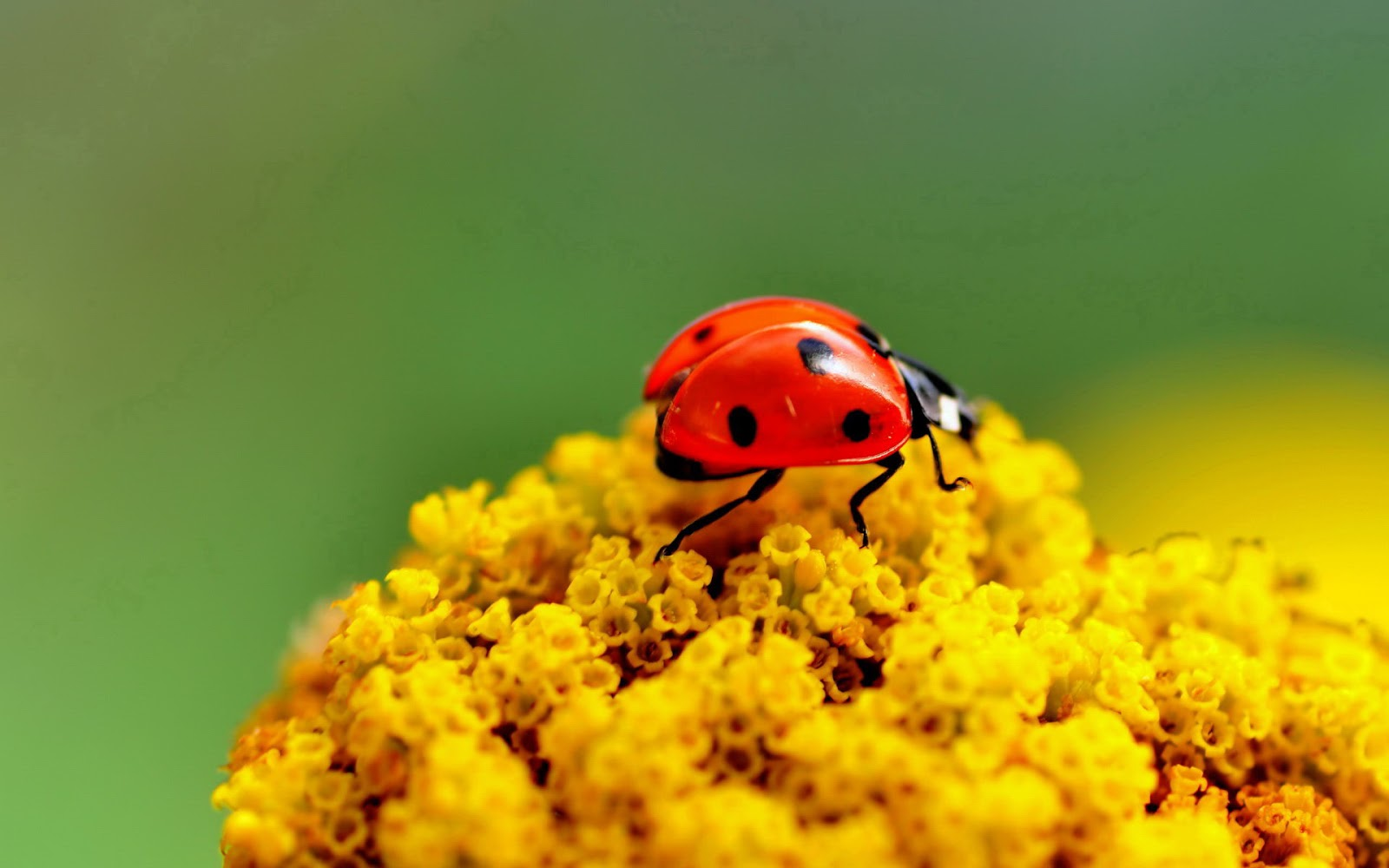 Collection of Photographs: Most Beautiful Ladybug Photography